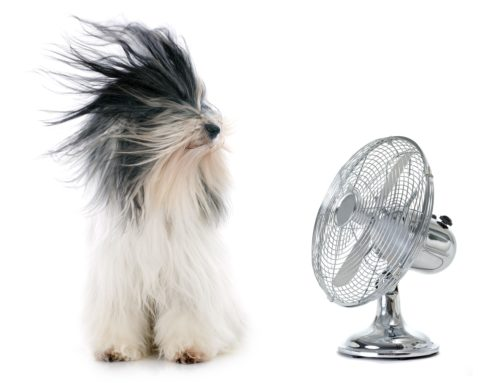 Air conditioning or ventilation – what should you bet on?
